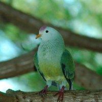 Les espèces uniques de Polynésie française menacées